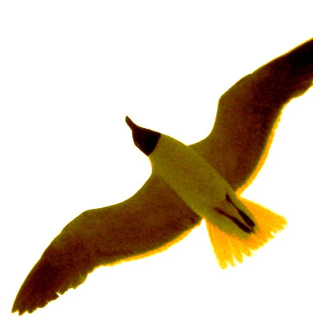 Department Logo (Yellow Seagull)
