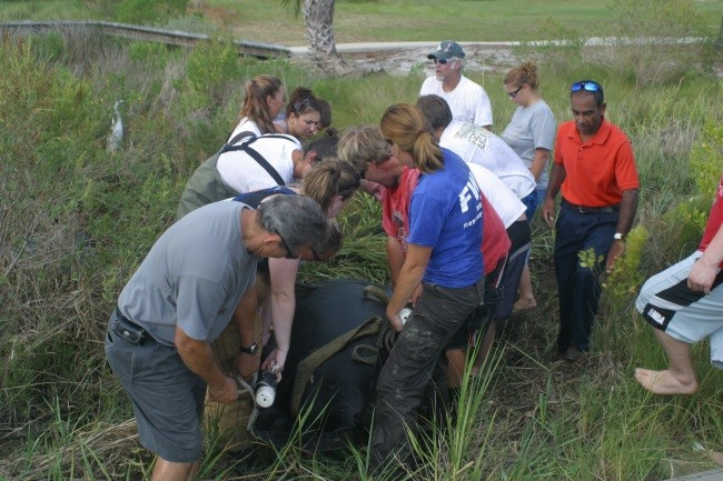 Manatee rescues and assists with FWC