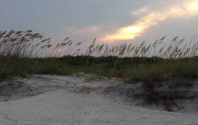 sand dunes with tall grass